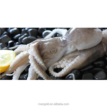 Cheap price natural live octopus for sale