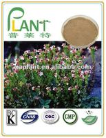 100% Natural Eyebright herb herbal extract powder