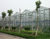 China Xintai Factory Multispan Agricultural Greenhouse
