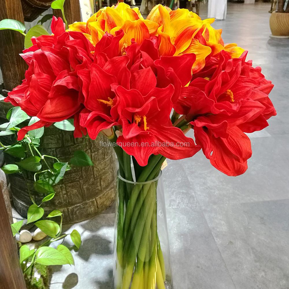 Kaffir Lily Flower Kaffir Lily Flower Suppliers And Manufacturers