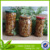 canned nameko mushroom in tin