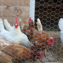 Chicken Fence Small Bird Aviary Cage Wire Mesh