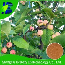 Best Quality hawthorn berry/leaf extract