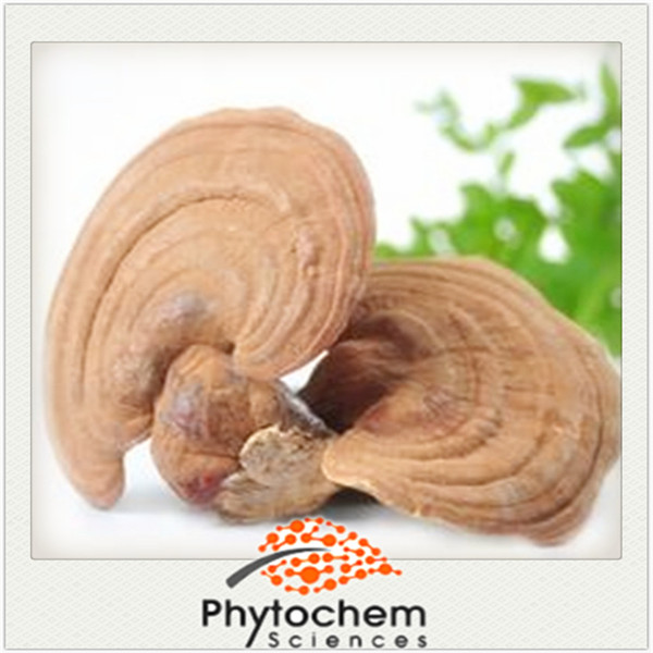 Reishi Shell-broken Spore Powder 1% Triterpenoid