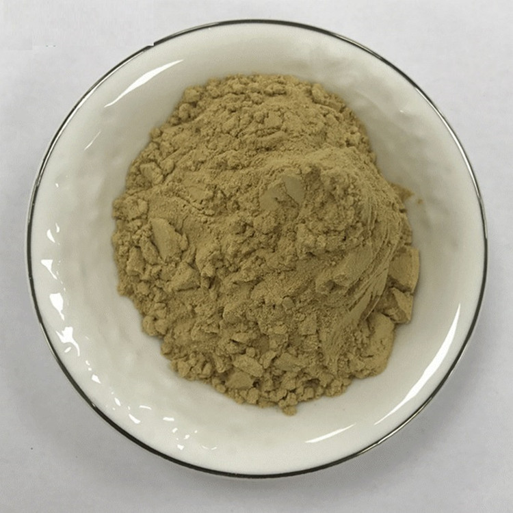 Factory Supply Radix Notoginseng P.E. /Panax notoginseng Extract Powder 5:1