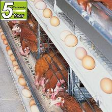 High quality factory price chicken breeds
