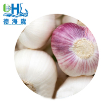 Laiwu garlic in 2017 years in shandong with different sizes and good quality