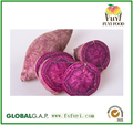2015 China 100% fresh sweet potato rich in fiber