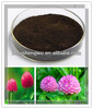 women health supplement Red Clover Extract /Trifolium pretense extract powder