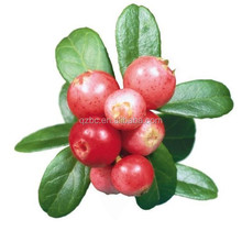 anti-aging the king of VC 100% pure organic rosehip oil