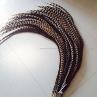 Natural color 65-70inches Reeves Pheasant Feather Tails