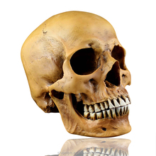 1: 1 skull model resin ornaments Cosplay party decorating props