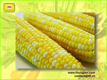 canned sweet corn export by Thongtan Foodstuff