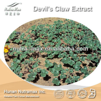 Devils Claw Root Extract, Natural Devils Claw Root Extract, Devils Claw Root Extract Powder
