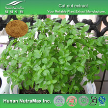 Health Food Cat nut Extract, Medical Cat nut Extract Powder, Cat nut Powder