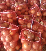 China fresh yellow onion market price