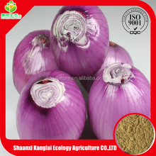 Factory Directly Selling Allium Cepa/Wholesale Onion Extract Powder with Good Quality