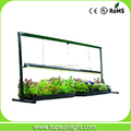 EDL T5 24w with reflector mini garden