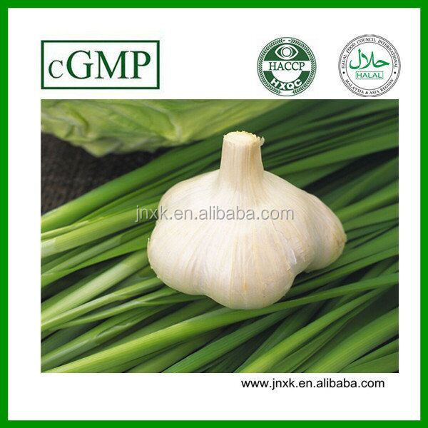 Feed Additive Garlic Powder Plus Allicin Powder 25% for fish and poulty