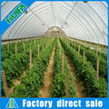 Alibaba Portable Indoor Greenhouse Plastic Roll on sale