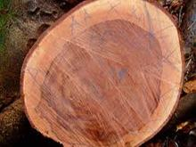 Hardwood Logs for sale