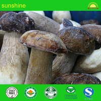 Bolete Mushroom (Boletus edulis Bull) Mycelium Spores Spawn Dried Seeds from yunnan china