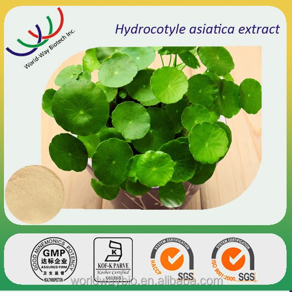High quality Chinese herbal extract 100% pure natural gotu kola plant extract