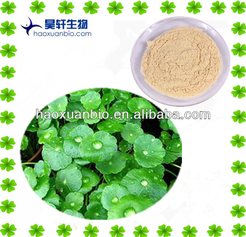 Chinese medical herb Gotu Kola Extract