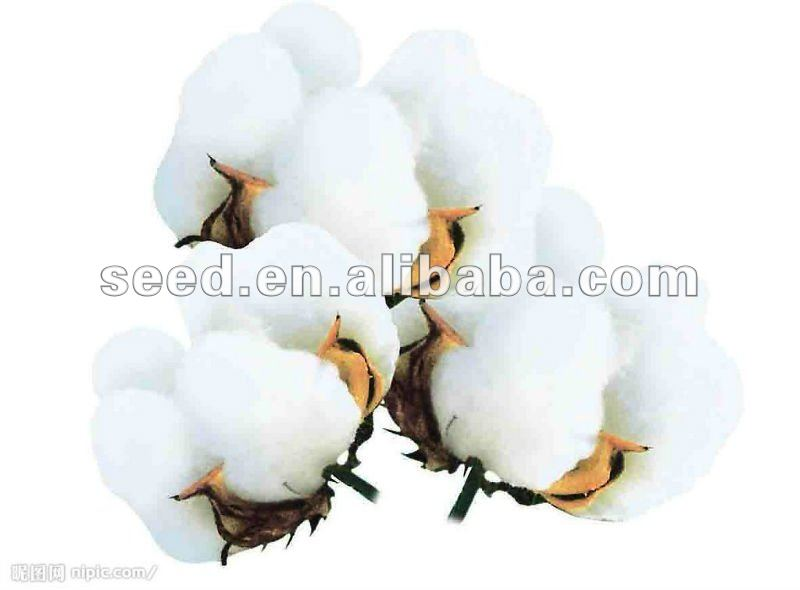 RL2 hybrid cotton seed for planting,