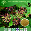 100% Pure Natural Antioxidant Angelica sinensis Extract / Dong Quai Extract