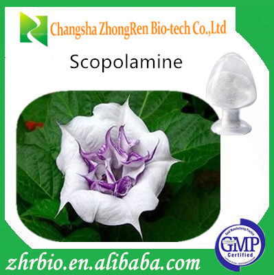 Natural Atropa belladonna extract with Atropine, Hyoscyamine and Scopolaminefrom GMP manufacturer