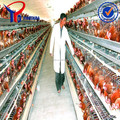saudi arabia poultry farming chicken cage for sale