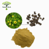 Natural Herb Extract Cat's Claw Powder