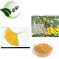 High quality low price natural ginkgo bilabo extract