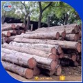 Burma Teak Logs ,burma square logs and sawn timber