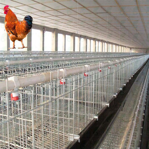 Breeding chickens used Poultry house equipment suppliers and manufacturers