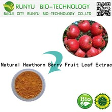Natural Hawthorn Berry Fruit Leaf Extract