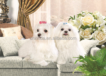 2015 Newest HD 3D Lenticular Picture for lovely Pet Manufacturer