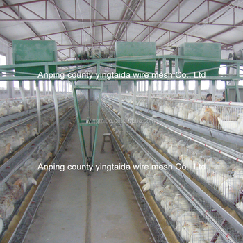 hot sale price automatic chicken layer cage for sale in philippines