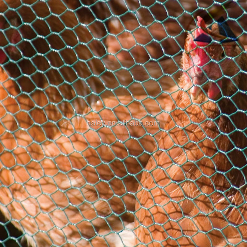 chicken mesh but from anping(passed iso and bv certification)