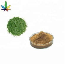 Natural Plant Extract Gynostemma Leaf Extract Powder Anti - Aging