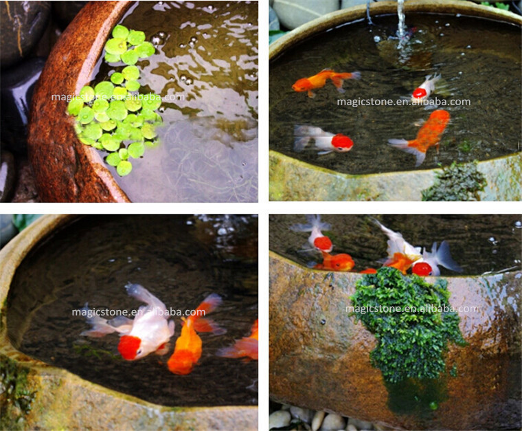 Stone pond fish feeder buy pond fish feeder auto fish for Buy pond fish