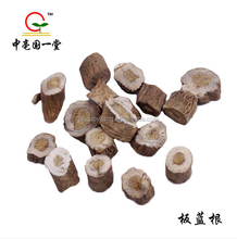 GMP factory supply high quality radix isatidis/ Isatis root /Banlangen/Ban lan gen wholesale best price