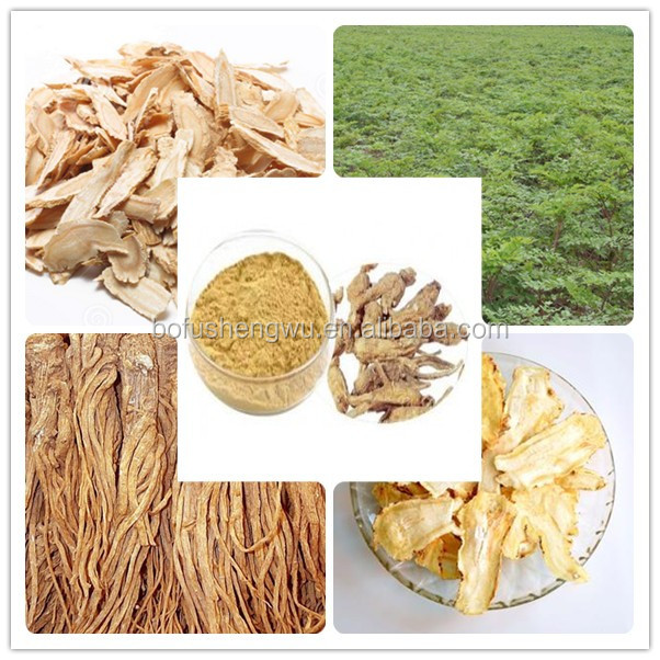 angelica extracts powder/radix angelicae extract/natural angelica sinensis extract