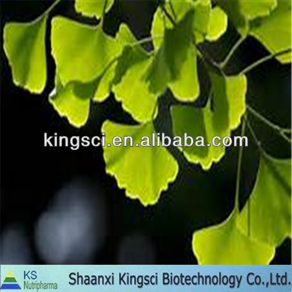 High quality of natural ginkgo biloba oil extract