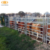 Alibaba best supplier hot sale good quality cattle livestock