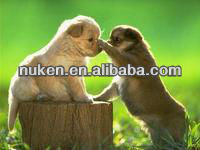 PET High definition 3D pictures of dog or puppies