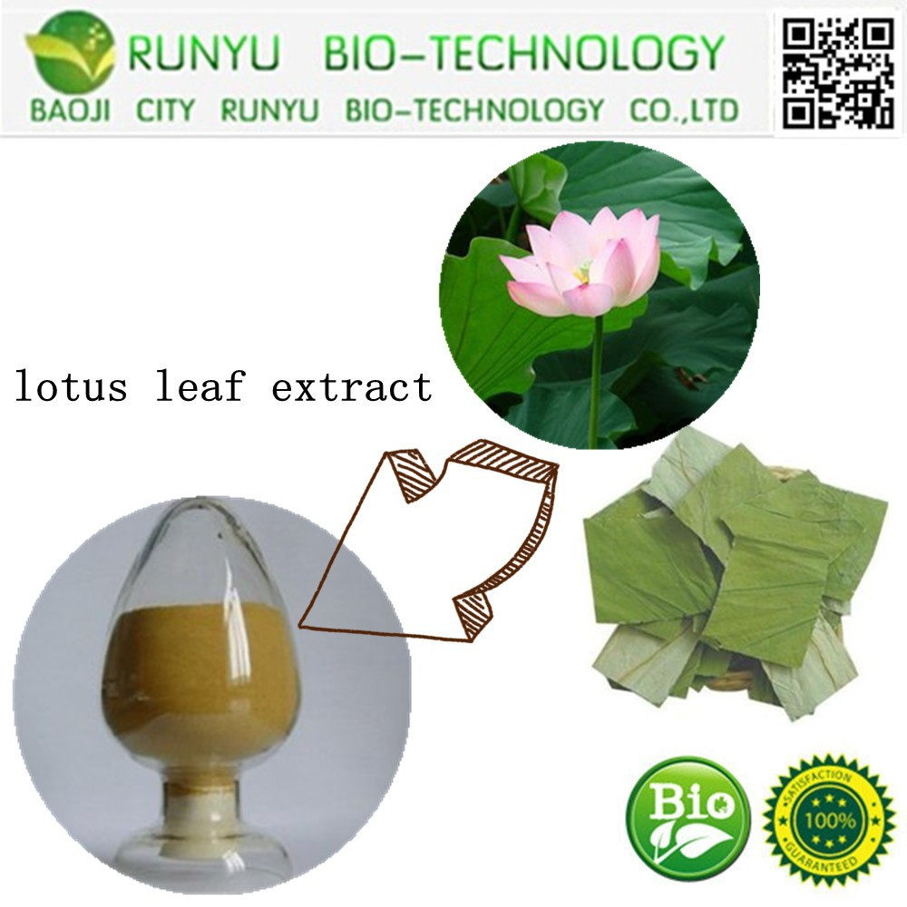 10 Years manufacturer supply 100% natural plant extract lotus leaf extract with free sample