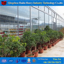 Standard Glass Commercial Greenhouse for Sale Vegetable