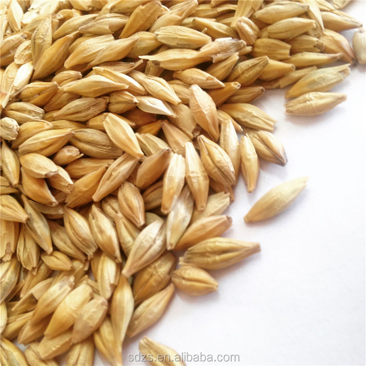 Certificated Premier Ukraine Animal Feed Barley In Bulk Supply Barley Price Best
